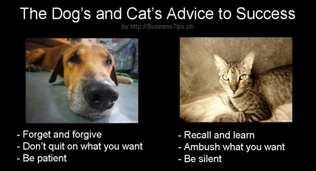 Dog and cat advice to success